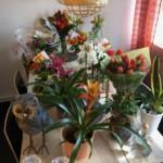 blommor invigning glaucus assistans nytt kontor
